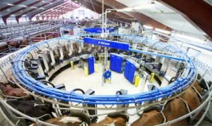 The world's first automatic milking rotary AMR system